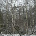 雪降りました!!