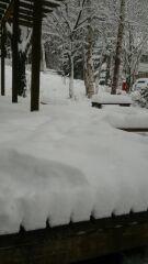 白樺に雪が振りました!