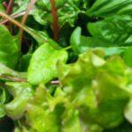 新鮮な野菜たち!!