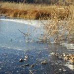 女神湖凍りはじめました!