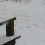 雪降っています!