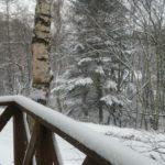 良い雪です!