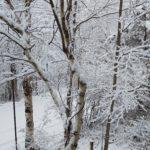 また冬が来たー!!