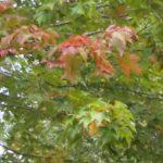 秋の気配!