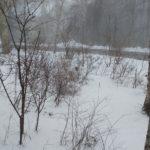 久しぶりの雪です‼️
