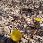 春がきた❗️