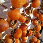 今年も干し柿つくっています!