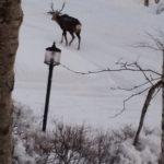 鹿さん  お散歩?